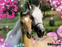 Photo de cheval-83