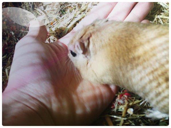 « La cruauté envers les animaux peut devenir violence envers les hommes. »