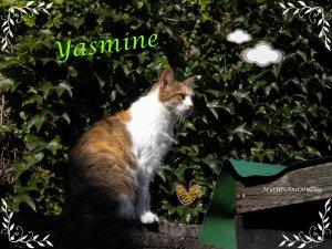 Mes chats: La mère Coline et sa fille Mimine