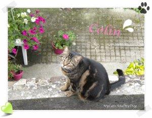 Mes chats: Fripouille et son frère Colin