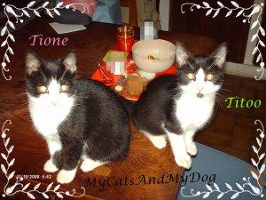 Les chats: Parce qu'ils ont tous été bébés un jour :)