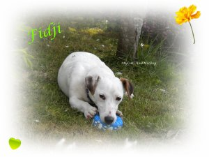 Mon 2eme chien: Fidji