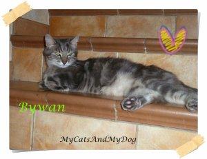 Les chats dans ma famille: Bywan !