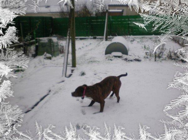 Diezel dans la neige hiver cet hiver