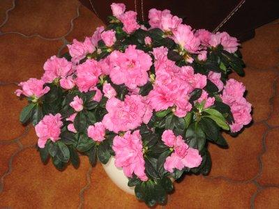 mes fleurs dinterieur