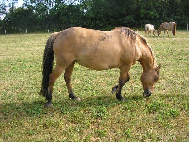 Propose chevaux et poneys à travailler et monter gratuitement