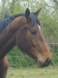 Photo de centre-equestre-de-L-if