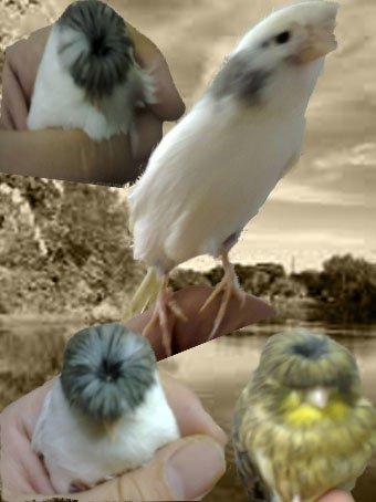 بعض من طيوري والحمدلله