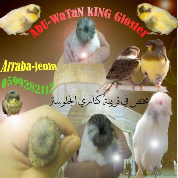بعض من طيوري