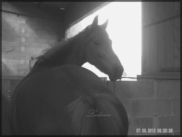 Un cheval n'est pas seulement un animal , il a un coeur qu'il nous offert il y a de sa des millions d'année mais on leurs a jamais rien donner en Retour.