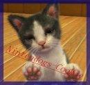Photo de nintendogs-Cookie