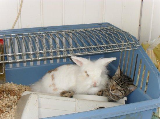 le lapin et le chat d'un ami  tres beau a voir