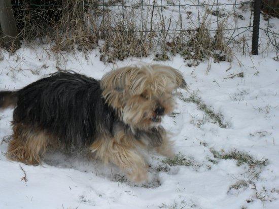 quelque photo de mon chien greg que jadore