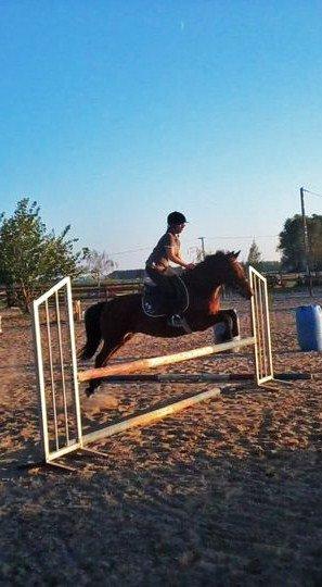 ℒ'équitation ,c'est telement beau ..
