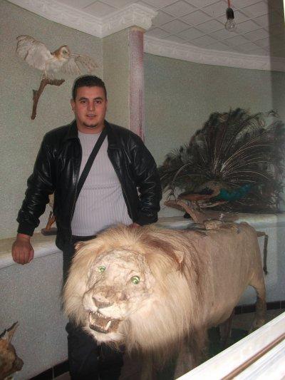 lion .............................