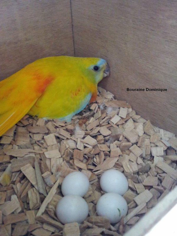 Quelques photos de mes oiseaux en 2012 (-1-)