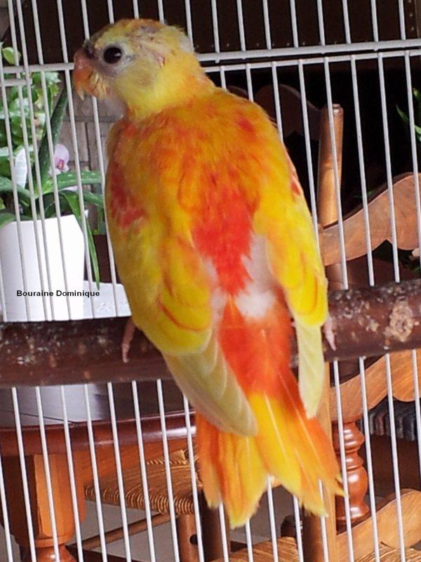 Quelques photos de mes oiseaux en 2012 (-2-)