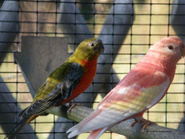 Quelques photos de mes oiseaux en 2012 (-3-)