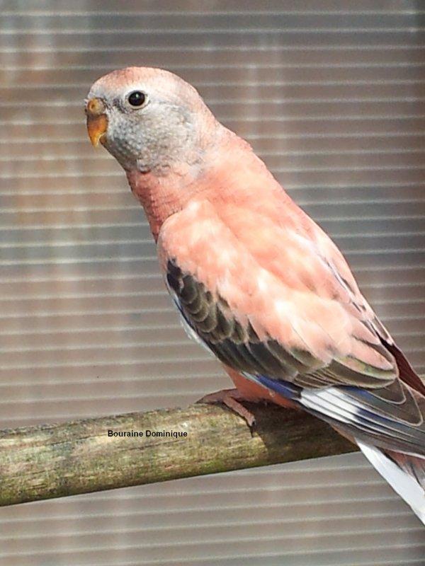 Quelques photos de mes oiseaux en 2012 (-4-)