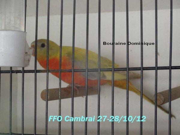 Quelques photos de mes oiseaux en 2012 (-5-)