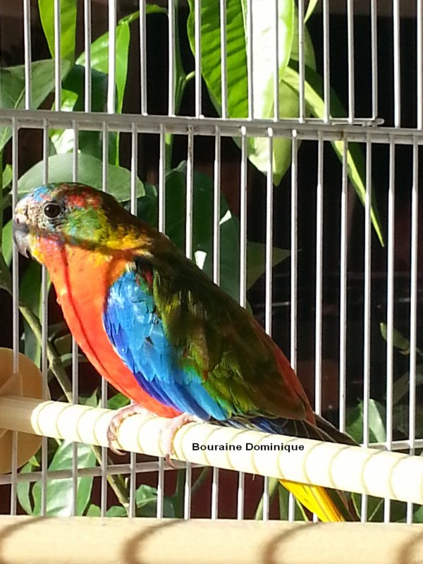 Quelques photos de mes oiseaux en 2012 (-6-)