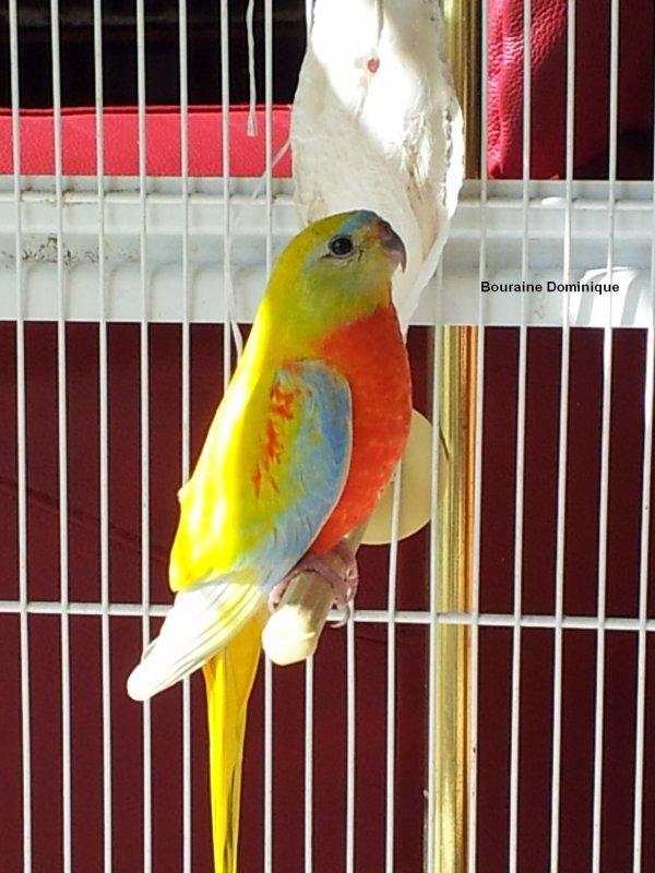 Quelques photos de mes oiseaux en 2012 (-7-)