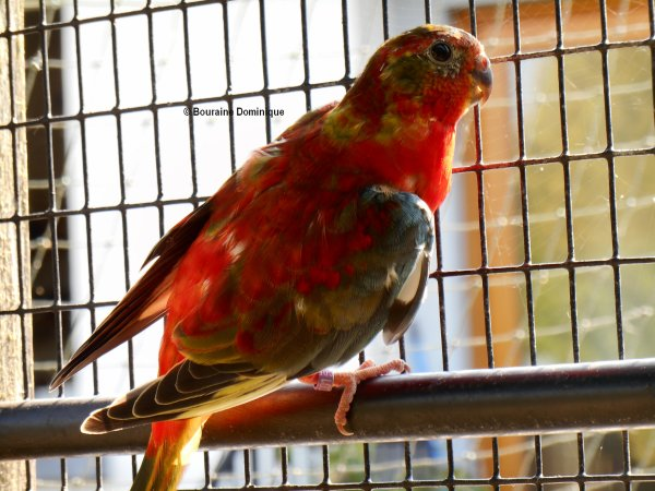 Turquoisine Opaline Gris Vert VPR & dos rouge jeune 2015 (suite 5)