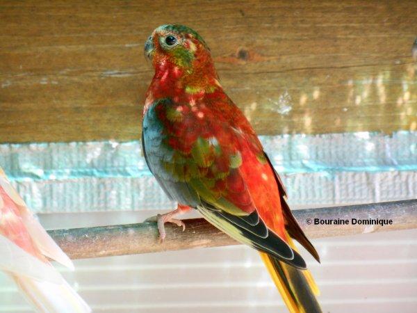 Turquoisine opaline Gris Vert VP & DOS rouge