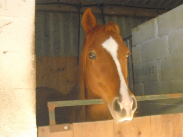 Sciencinfus <3 le poney parfait ♥