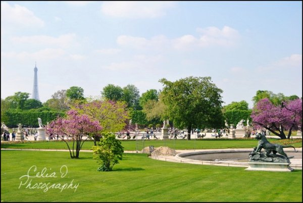Jardin des Tuileries ~ Paris