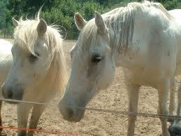 me deux chevaux