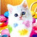 Photo de colorful-cat