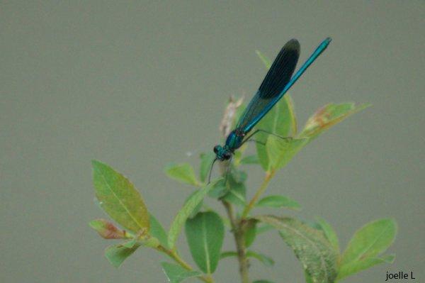 Les âmes, libellules de l'ombre...  Citations de Victor Hugo