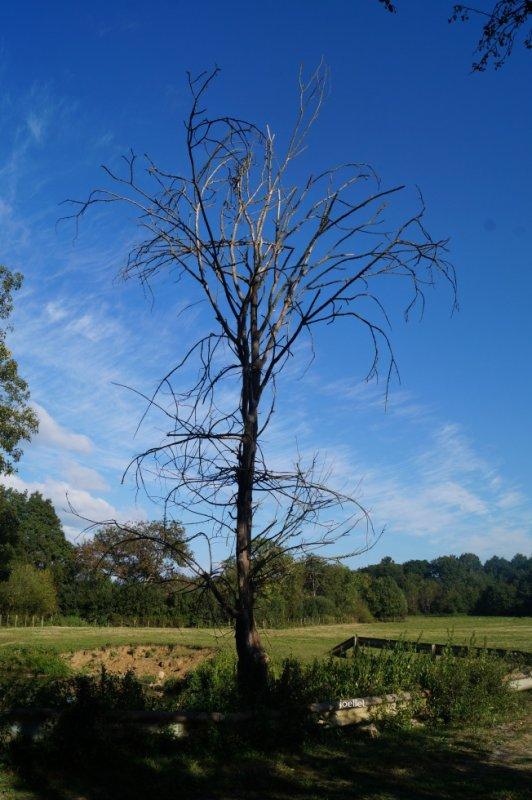 Écouter la forêt qui pousse plutôt que l'arbre qui tombe.  Citation de Friedrich Hegel