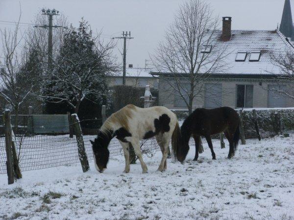 Ucana dans la neige