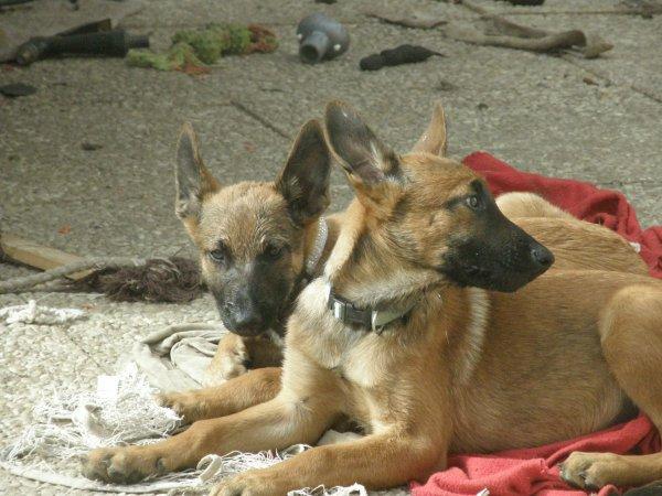 Hatila & Hashley, hatila partie dans sa nouvelle famille, hashley aussi