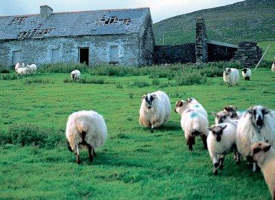 l'irlande, un trés beau pays aussi