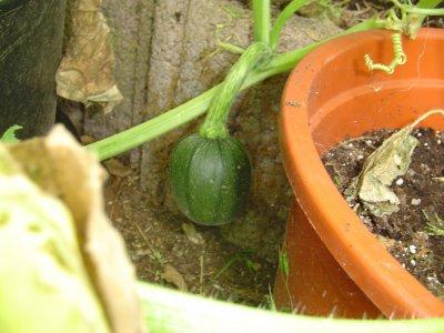 Petit repos au jardin avant le pluie...