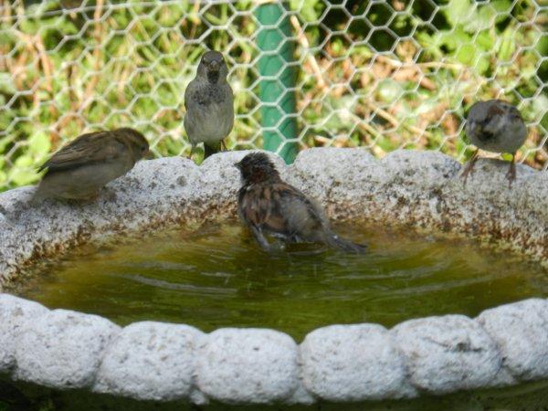 Les animaux de passage au jardin
