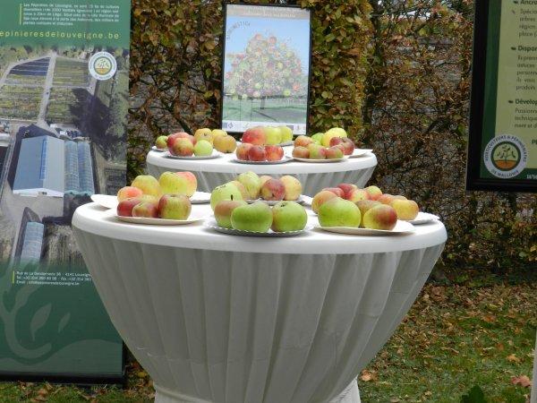 La fête de la pomme