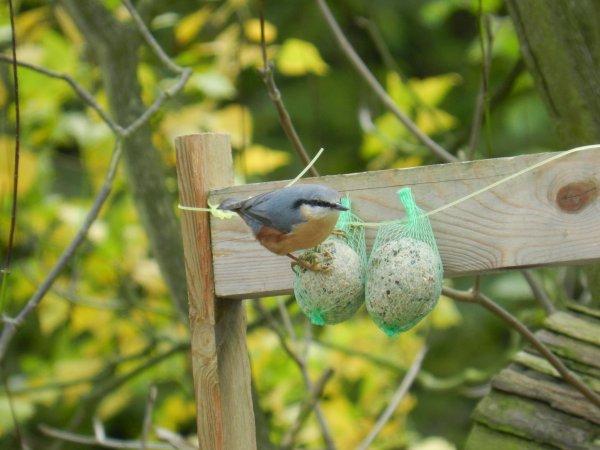 Je vous montre de superbes photos d'oiseaux ?