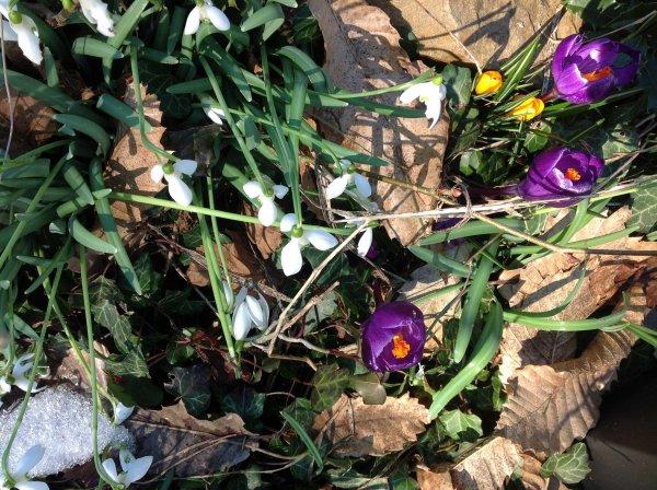 Entre hiver et printemps...