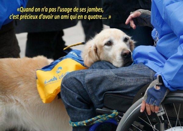 Pouvoir faciliter la vie des gens, à travers l'éducation d'un chien et une choses merveilleuse