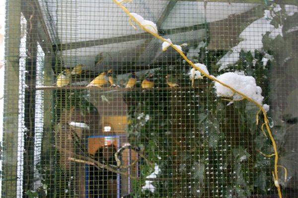 exotiques sous la neige