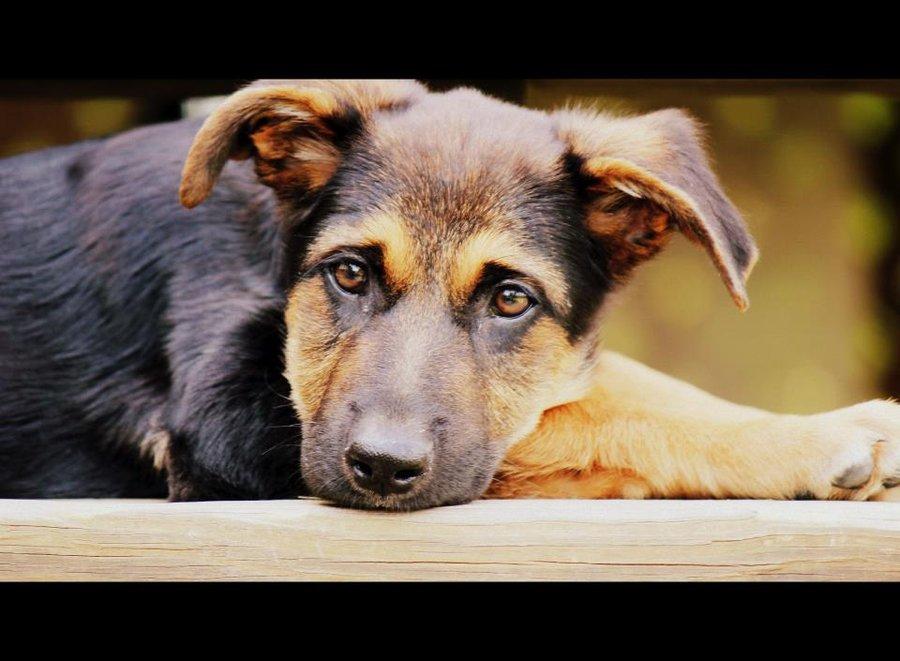 Blog de Dog-08