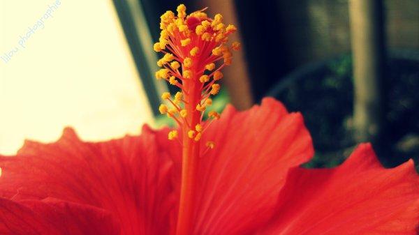 Série 2 Flowers .