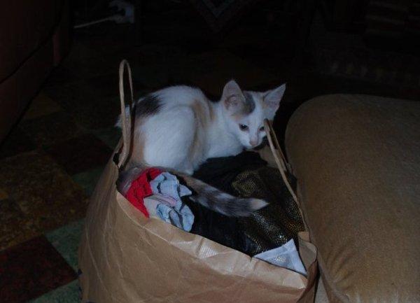 Un sac rempli de tissus et de robes de poupettes !  Chouette je vais y faire mon lit !!