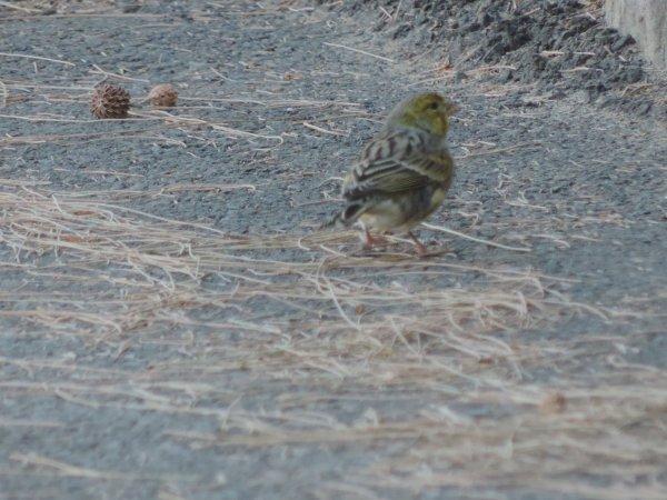 bonjour les gars après un  bon bout de Temp je refais surface lol!!!! dans quelque jours je vous présenterais mes oiseaux en préparation