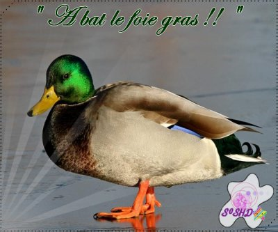 Article 28 →Foie gras