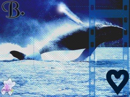 Article o8 →Les baleines